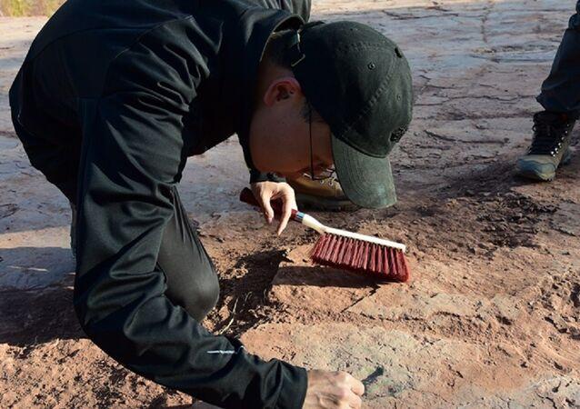 Scientists study dinosaur footprints
