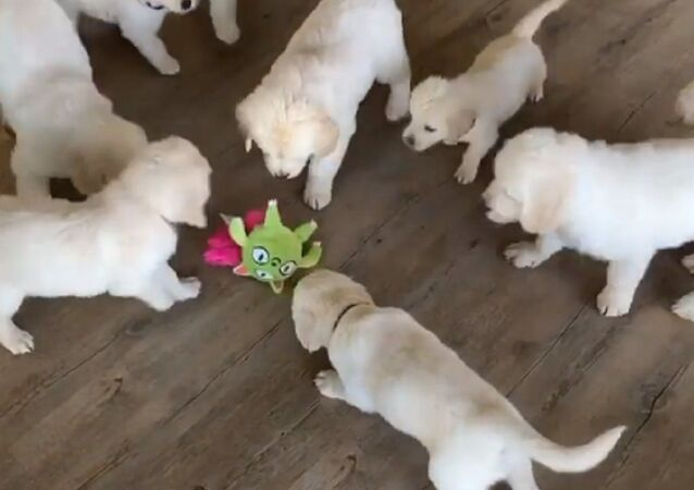 The nuggets love their new toy!