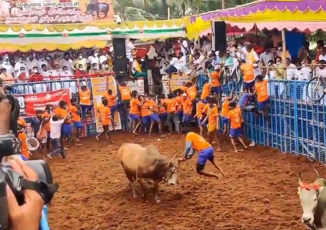 Jallikattu in Tamilnadu