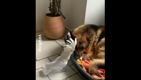 Humor And Animals   - Sputnik International