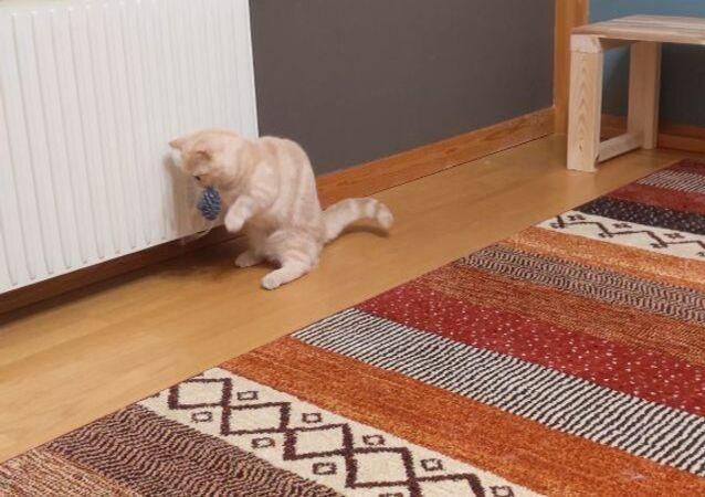 Cat is puzzled
