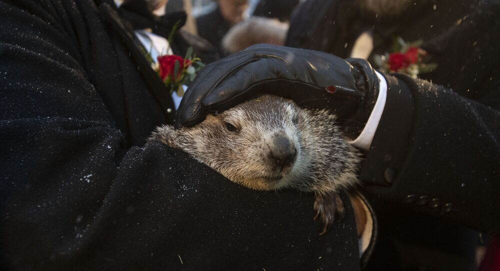 Groundhog Club co-handlers John Griffiths and Al Dereume hold Punxsutawney Phil, the weather prognosticating groundhog, during the 134th celebration of Groundhog Day on Gobbler's Knob in Punxsutawney, Pa. Sunday, Feb. 2, 2020.