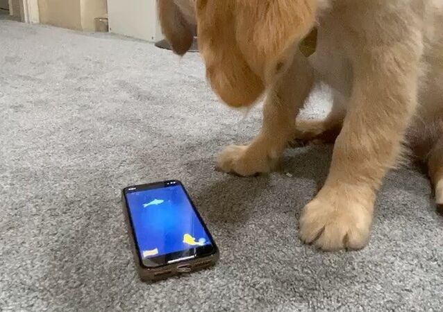 puppy and smartphone