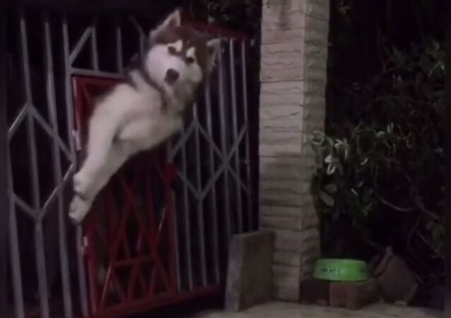 Mission Impossible? Not for This Doggy