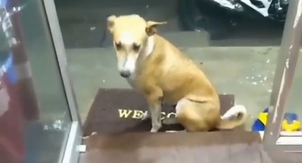 When Loving Gesture Needs No Words: Stray Dog Finds a Friend