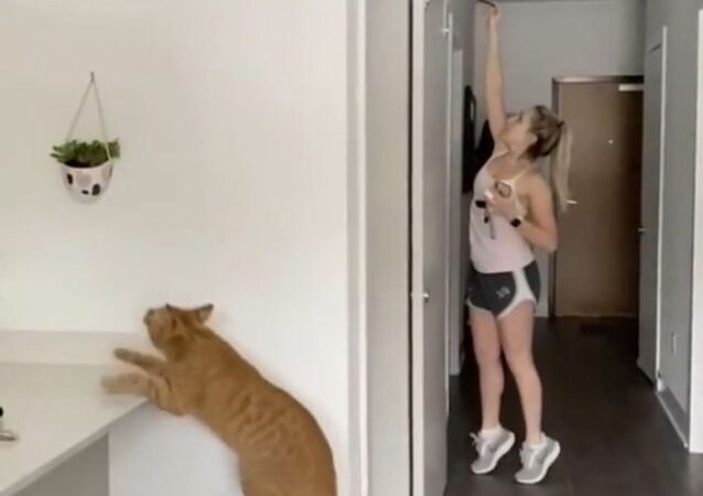 Can You Hide Anything Away From a Cat? Well, Not in This Case