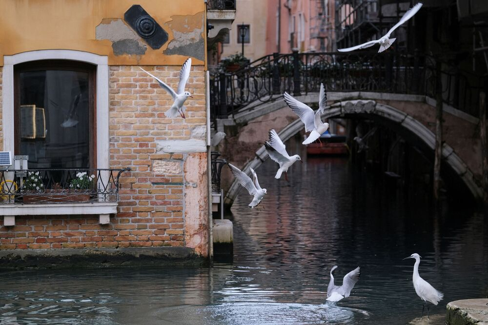 Empty Spaces and Abandoned Places: Venice Deserted as Traditional Carnival Held Without Tourists