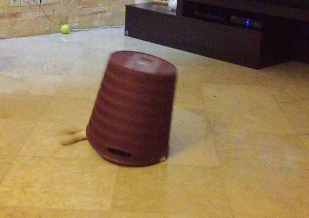 A video shows an adorable golden retriever enjoying playing with a dust bin