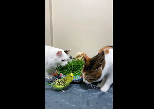 A video showing guinea pigs, birds, and cats eating is pure gold. Try to watch it without exclaiming Awwww!