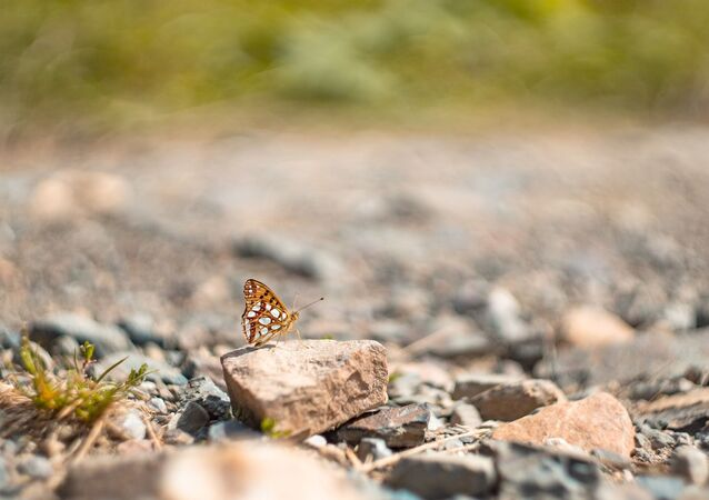 Butterfly on a rock.