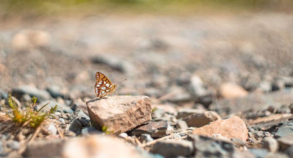 Butterfly on a rock.