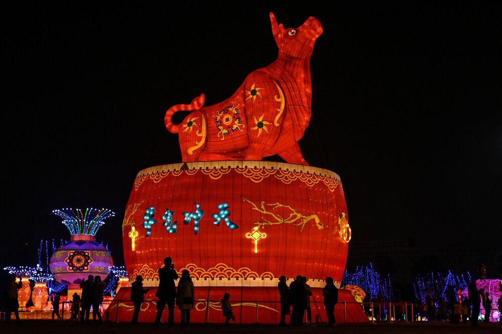 People look at a giant ox lantern in a park in Wuhan in China's central Hubei province on 11 February 2021, ahead of the start of the Lunar New Year, which ushers in the Year of the Ox on 12 February.