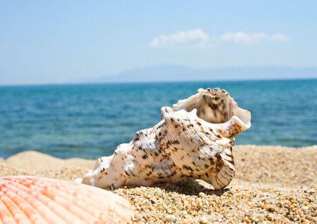a seashell on a beach