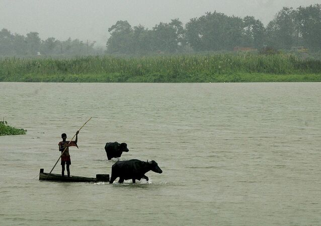 A man crosses the Teesta canal along with his cattle at Fulbari village, near the India-Bangladesh border, about 12 kilometers (7 miles) from Siliguri, India, Tuesday, Sept. 6, 2011.
