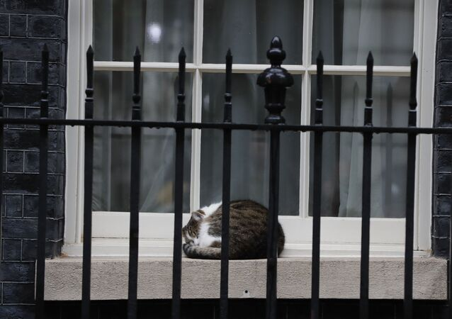 Larry the cat, Britain's Chief Mouser to the Cabinet Office sleeps on a window sill of 10 Downing Street in London, Wednesday, Oct. 21, 2020.