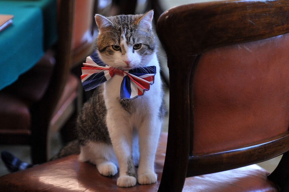 Larry, the 10 Downing Street cat, sits on a chair wearing a British Union Jack bow tie ahead of the Downing Street street party, in central London, on 28 April 2011.