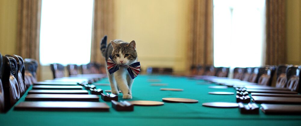 Larry, the 10 Downing Street cat, walks on the cabinet table wearing a British Union Jack bow tie ahead of the Downing Street street party, in central London, on 28 April 2011.