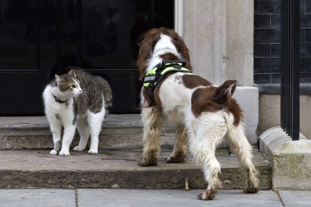 British Prime Minister David Cameron's Cat, Larry (L), comes face to face with a police dog called Bailey (R) as it does security checks outside the door of 10 Downing Street in London on 30 March 2015.