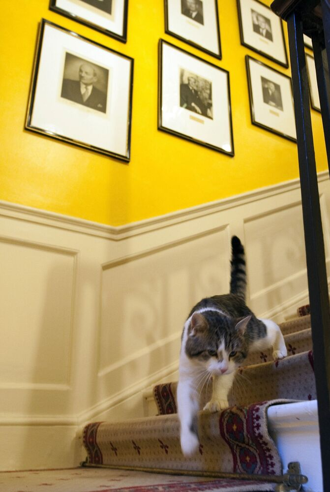 In this Tuesday 15 February 2011 file photo, Larry the new cat for 10 Downing Street, walks down the stairs of the Prime Minister David Cameron's official residence in London. Monday, 15 February 2021 marks the 10th anniversary of rescue cat Larry becoming Chief Mouser to the Cabinet Office in a bid to deal with a rat problem at 10 Downing Street.