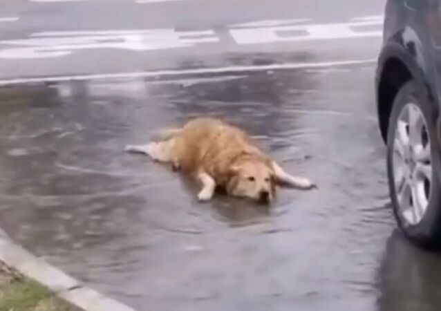 A video of a golden retriever is making the rounds on social media, showing an adorable dog actually celebrating life to the fullest.