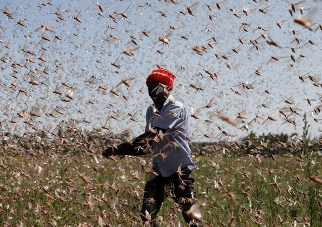 A man tries to chase away a swarm of desert locusts away from a farm, near the town of Rumuruti, Kenya, 1 February 2021.