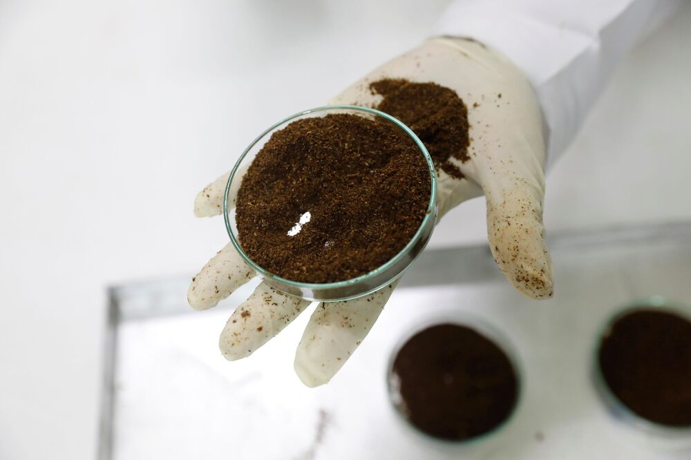 Philip Ouma, a laboratory manager, holds a dish containing ground desert locusts at the laboratory Spectralab, in Nairobi, Kenya, 16 February 2021.