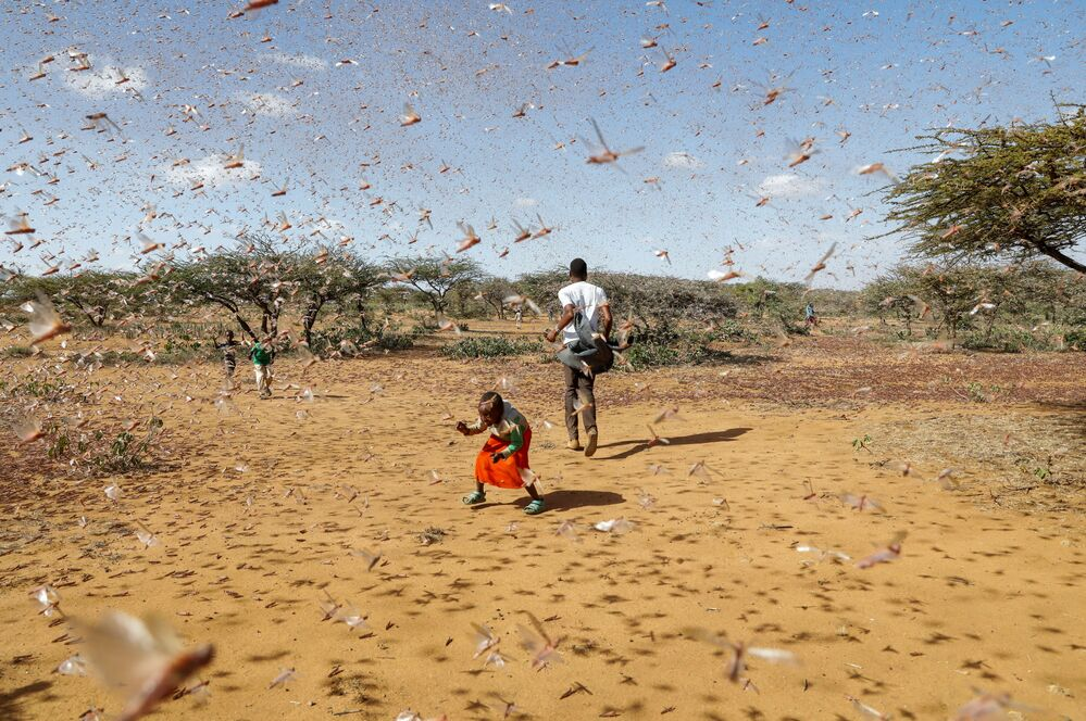 A child tries to chase away a swarm of desert locusts in Naiperere, near the town of Rumuruti, Kenya, 30 January 2021.
