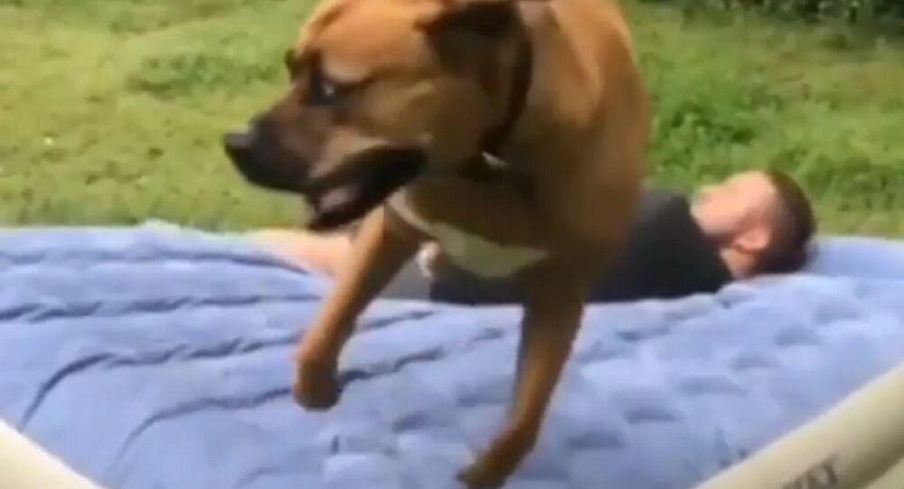 Flying Dog.