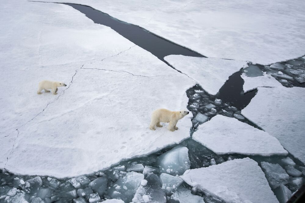 Polar bear mama and her cub roaming on Franz Josef Land in the Barents Sea.