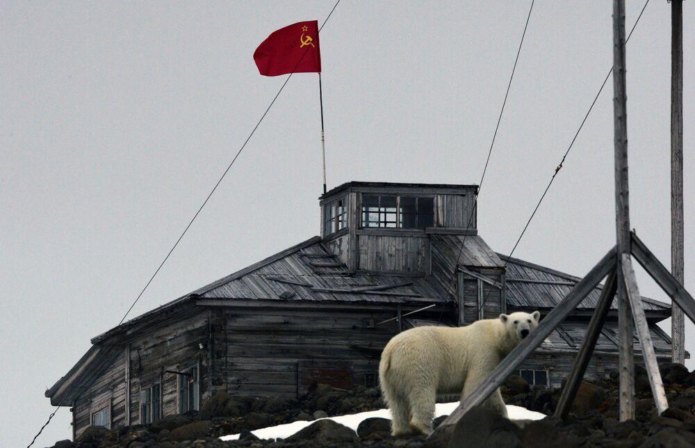 A polar bear spotted near a polar station on Franz Josef Land.