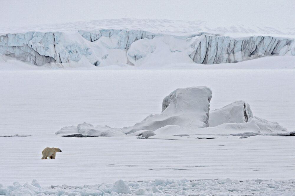 A solitary polar bear strolling on a glacier in the Arctic Ocean.