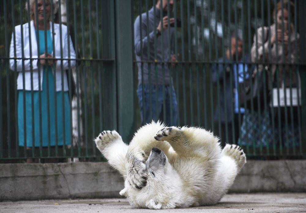 Umka-Ayany, a polar bear from Yakutia, makes a dramatic performance for onlookers.