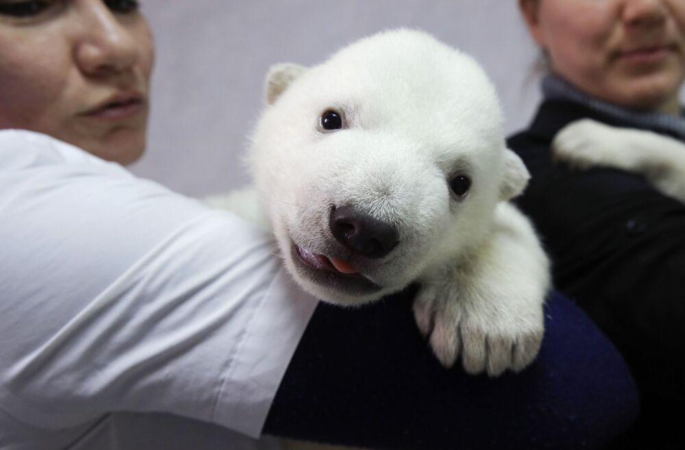 A polar bear cub at a wildlife park in Gelendzhik, Russia.