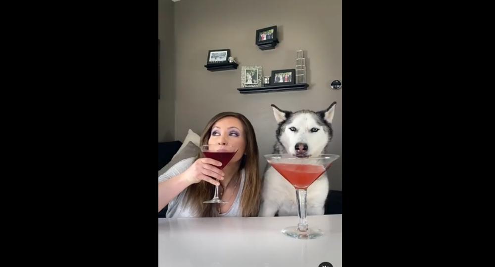 Husky drinking