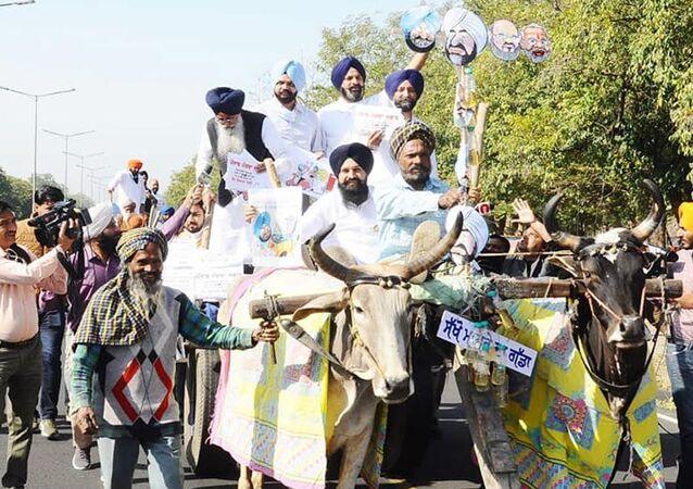 Akali MLAs ride to Punjab Assembly on bullock carts