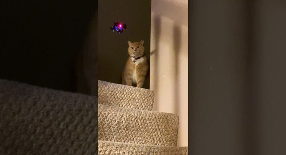 Playful Kitty Swipes at Mini Drone || ViralHog
