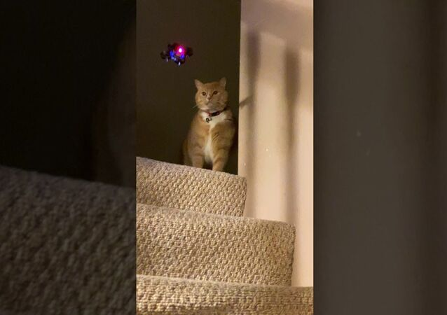 Playful Kitty Swipes at Mini Drone    ViralHog
