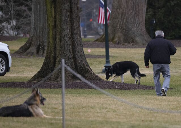 First dogs Champ and Major Biden are seen on the South Lawn of the White House in Washington, DC, on January 25, 2021. - Joe Biden's dogs Champ and Major have moved into the White House, reviving a long-standing tradition of presidential pets that was broken under Donald Trump. The pooches can be seen trotting on the White House grounds in pictures retweeted by First Lady Jill Biden's spokesman Michael LaRosa, with the pointed obelisk of the Washington Monument in the background.Champ is enjoying his new dog bed by the fireplace, and Major loved running around on the South Lawn, LaRosa told CNN in a statement on January 25, 2021.