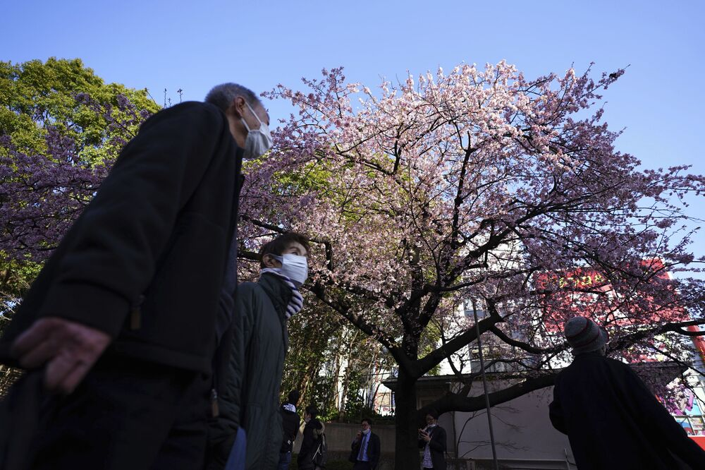 People wearing protective masks to avoid the spread of coronavirus, walk near cherry blossoms at Ueno Park Wednesday, 10 March 2021. The Japanese capital confirmed more than 300 new coronavirus cases on Wednesday.