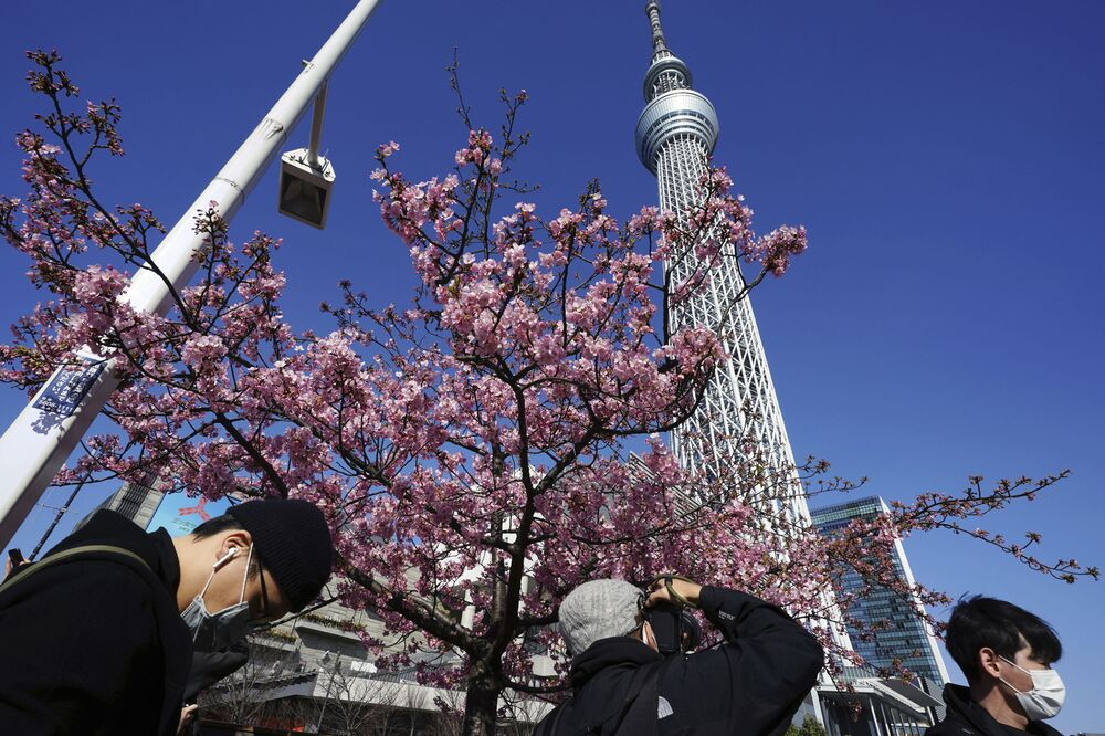 People wearing protective masks to help curb the spread of coronavirus look at Kawazu cherry blossoms near the Tokyo Skytree, the tallest structure in Japan, Tuesday, 23 February 2021, in Tokyo.