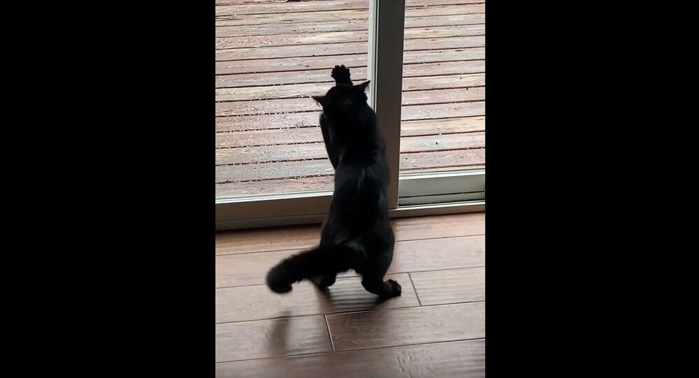 Kitten Doesn't Understand Glass Yet || ViralHog