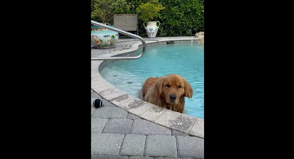 Doggy Doesn't Want to Get Out of Pool    ViralHog