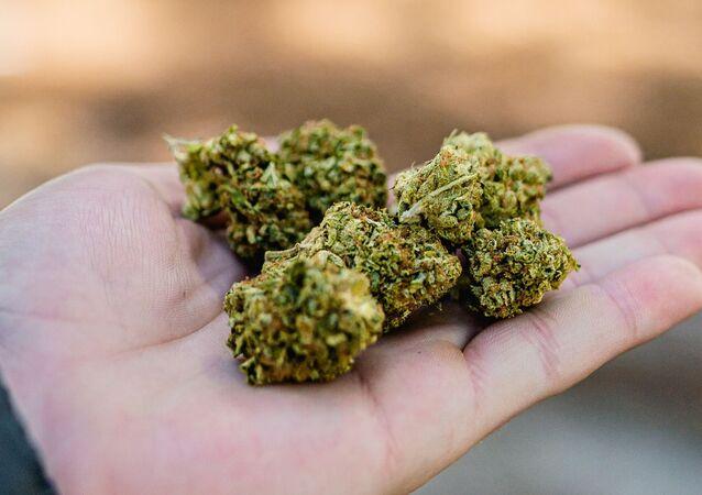 Marijuana, Lucas Fonseca via Pexels