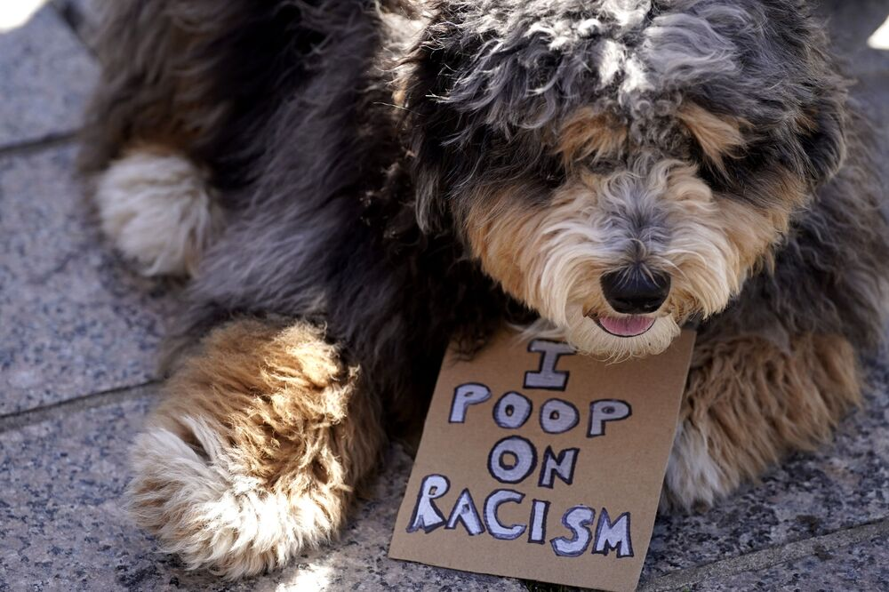 A dog with a sign is seen as people march during a Stop Asian Hate rally for AAPI (Asian Americans and Pacific Islanders) at the Logan Square Monument in Chicago, Illinois, on Saturday, 20 March 2021. A diverse crowd gathered to demand justice for the victims of Atlanta, Georgia spa shootings as well as for an end to racism, xenophobia, and misogyny.