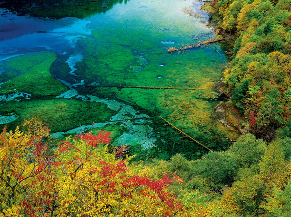 Five Flower Lake in Jiuzhaigou Valley, Sichuan, China.