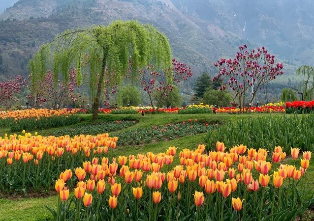 Whenever you get the opportunity, do visit Jammu and Kashmir and witness the scenic Tulip festival