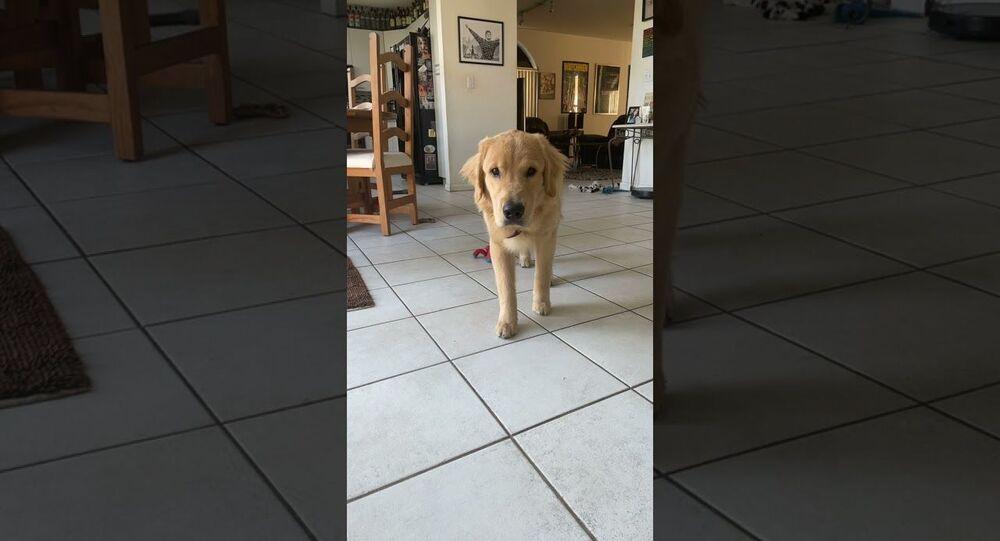Puppy Dog Pounces After Slowly Stalking Its Human    ViralHog