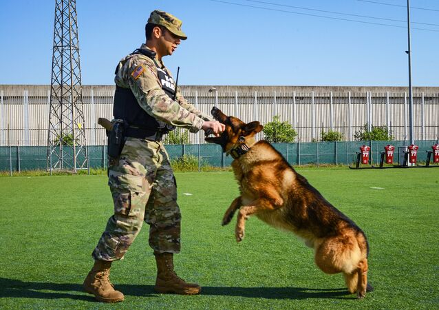 """U.S. Army Sgt. Patrick Harrington, Soldier assigned to the USAG Italy 18th Military Police Detachment, conducts basic obedience drills with his military working dog """"Aran"""", under Covid-19 prevention condition at Caserma Ederle in Vicenza, Italy, on May 14, 2020"""