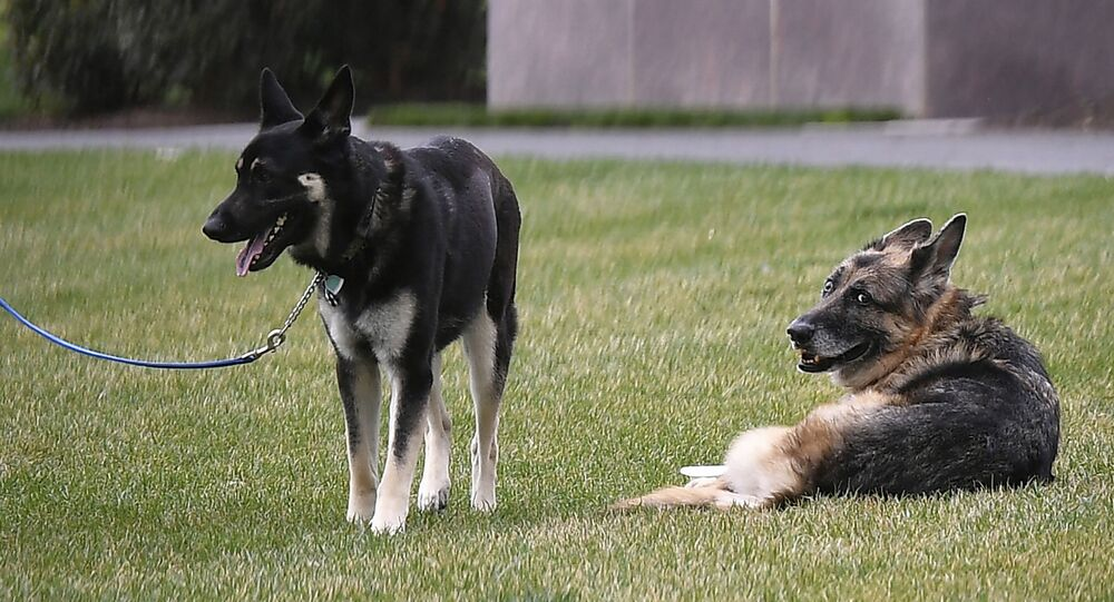 President Joe Biden and first lady Jill Biden's dogs Champ, right, and Major are seen on the South Lawn of the White House in Washington
