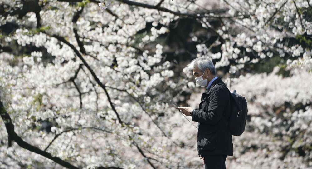 A man wearing a protective face mask stands near blooming cherry blossom trees Thursday, April 2, 2020, in Tokyo